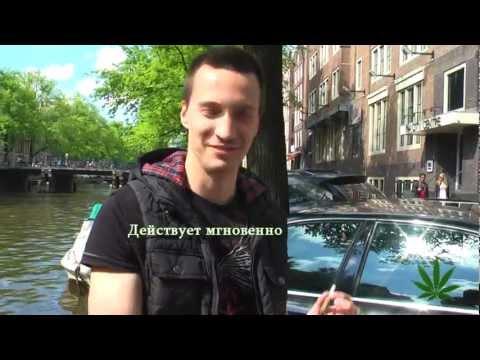 голландия знакомства