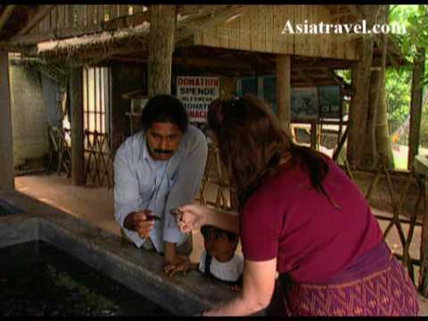 Exploring Sri Lanka by Asiatravel.com