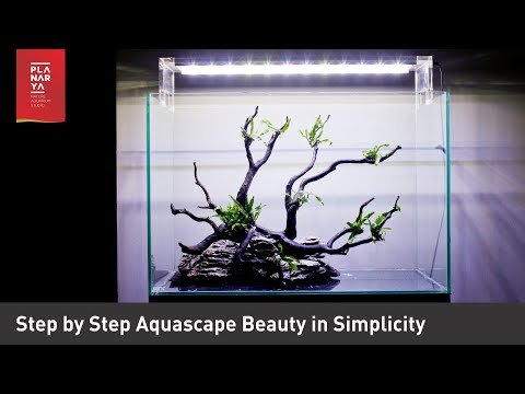 step-by-step-aquascape-beauty-in-simplicity