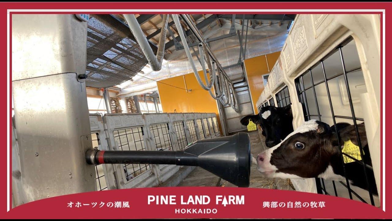 【哺乳ロボット】カーフレール試運転の様子【初導入】