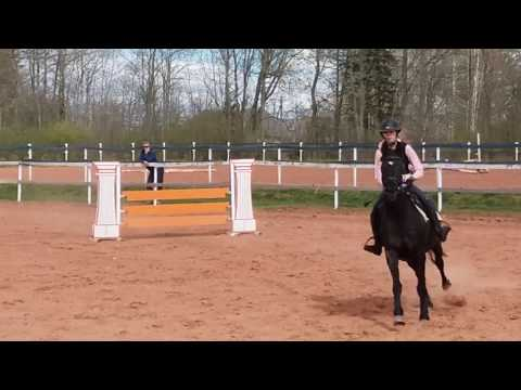 Poliitika, Heimtali hobusekasvandus