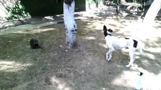 Собака возбудилась от кошки