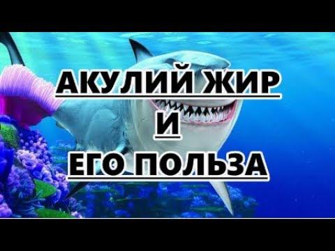 Акулий жир и его польза