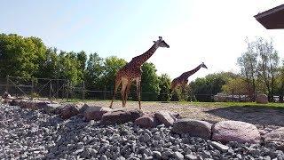 Toronto Zoo Tour Walkthrough 2018  4k
