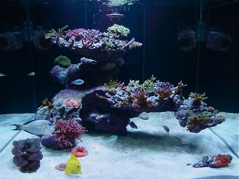"Aquascape with fijireefrock.com a 75 Gal tank 48"" L x 18 ..."