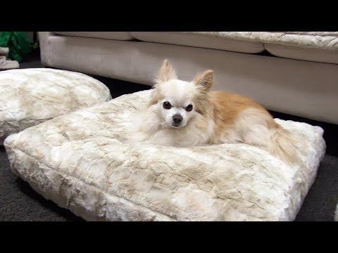 Peluche Plush Cuddle Cloud Cuddle Cream Dog Beds