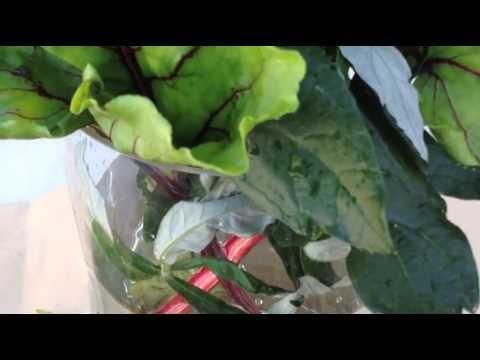 garden-bouquet-beet-and-estafiate-leaves