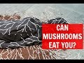 Can Mushrooms Eat You? (What is A Mushroom Burial Suit?)