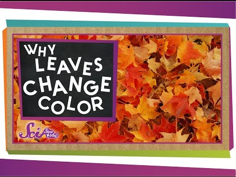 Why Do Leaves Change Colors In The Fall?