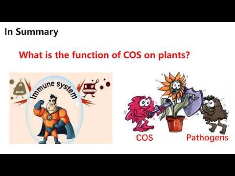 Chitosan oligosaccharide plant resistance activater | Dora