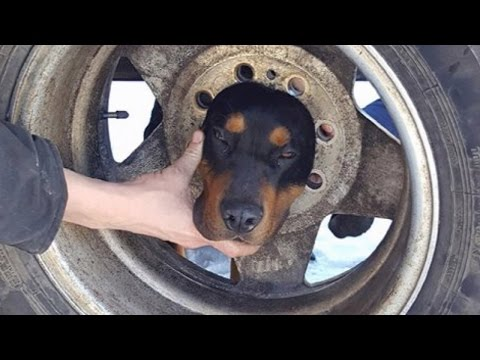Firefighters Free Puppy With Head Stuck In Tire Using Coconut Oil
