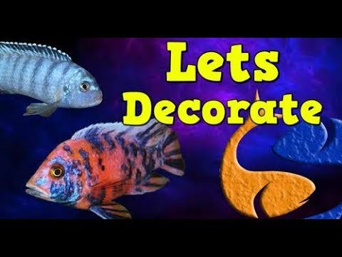 Decorating An African Cichlid Tank