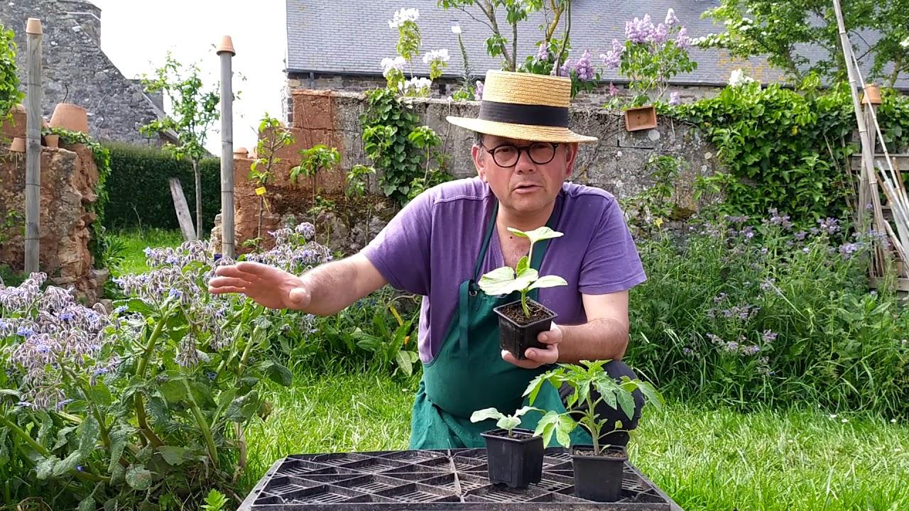Plantation de tomates et de courgettes (attention gelées ...