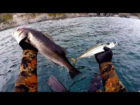 FIRST BASS OF THE SEASON (Spearfishing UK 2020)