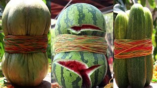 EXPERIMENT Watermelon VS 1000 Rubber bands