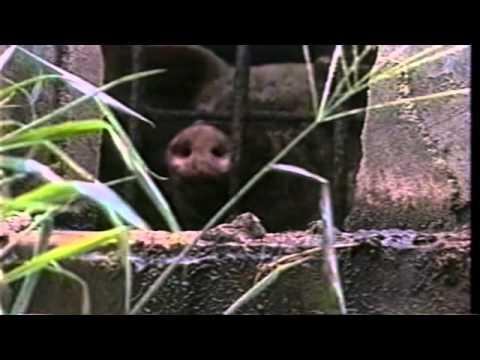 Terráqueos (Earthlings-2005) (Multi-subtitles)