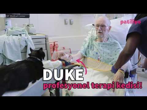 Duke Profesyonel Terapi Kedisi!