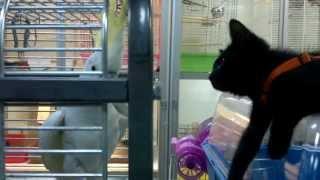 Прикольное видео в зоомагазине