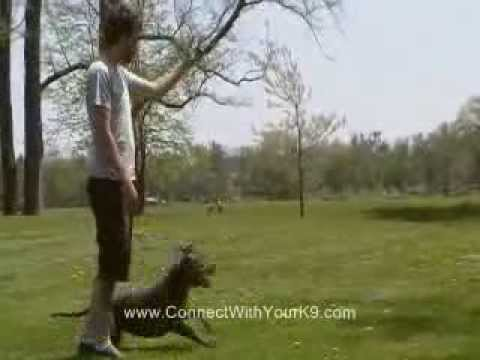 Dog Training In Buffalo, NY - Fun With a Pit Bull