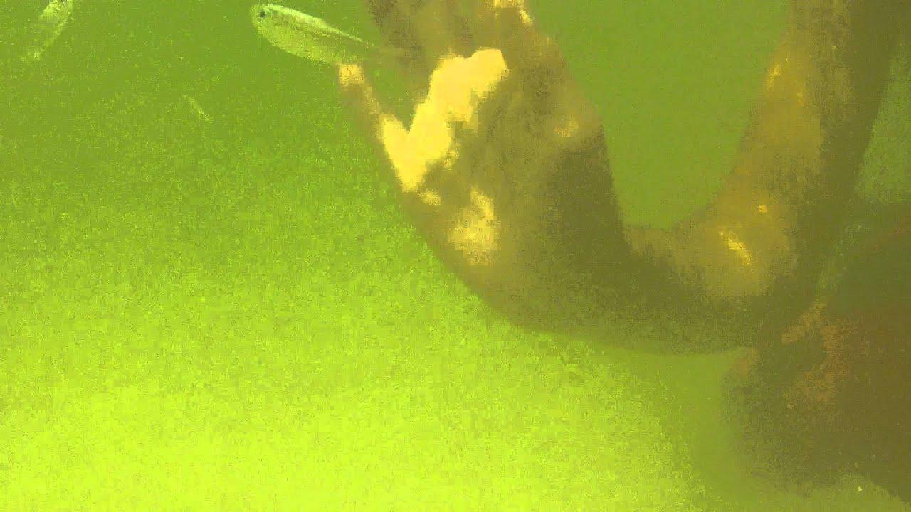 Snorkeling At Fort De Soto Park St Pete Beach Florida