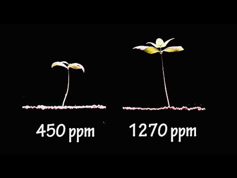 More Co2 is GOOD for Earth - Seeing is Believing - Time Lapse Video: 2 Plants Growing