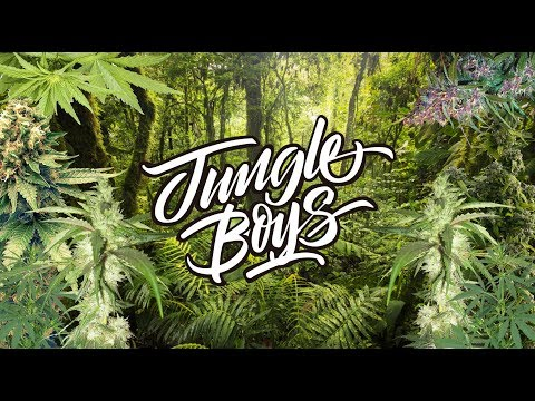 JUNGLE BOYS WEED REVIEW - YouTube