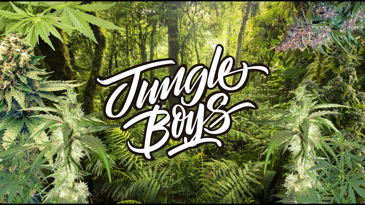 JUNGLE BOYS WEED REVIEW