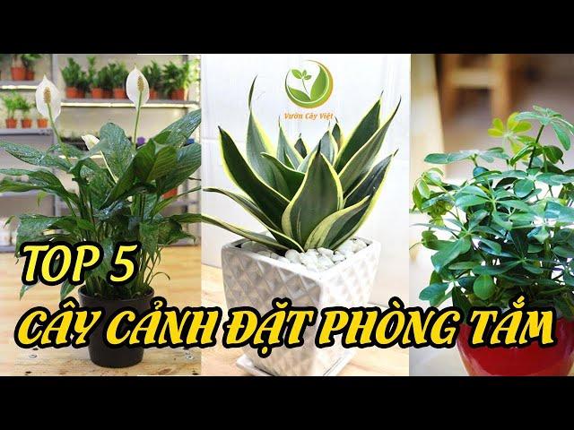 Tuyển tập 5 cây cảnh thích hợp đặt phòng tắm 🌿  | Vườn Cây Việt