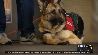 Northwest Battle Buddies Trains Shelter Dogs to Help Veterans with PTSD (4/6/18)