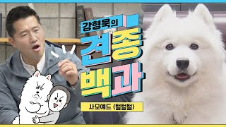 Samoyed hair part|Kang Hyung-wook's breed's encyclopedia X Extreme owner Somi X Backgomi