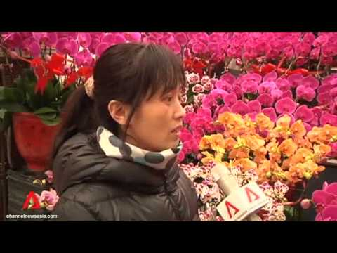 China spring festival flowers