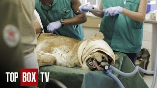 Wild Animal Rescue - Felida Tigers And Lionsrock