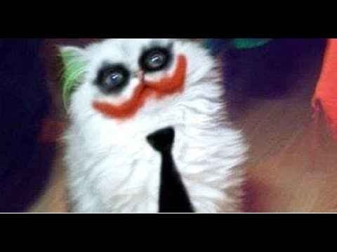 Cats are so funny you will die laughing - Funny cat compilation🔴 2018🐟🐠🐙🐧🐦🐥🐤🐣