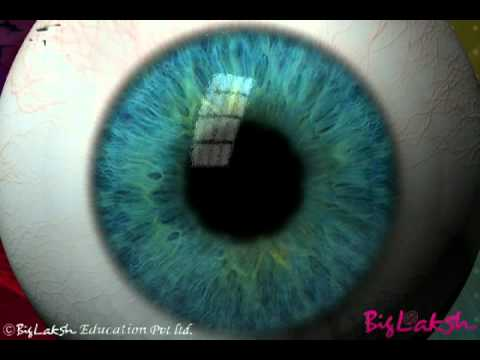 The structure of human eyes part1
