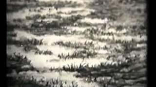 видео Ароморфозы