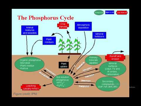 Fiorellino, Nicole;11/16: All You Need to Know About Phosphorus in Agriculture