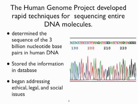 an analysis of the human genome project as a scientific effort Human genome project  complete set of dna in the human body this concerted, public effort was  individualized analysis based on each person's genome will.
