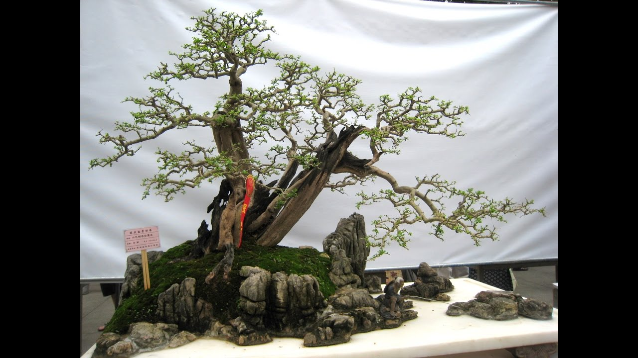 landscape with bonsai trees