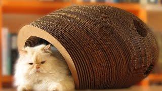 дом для кошки своими руками из дерева