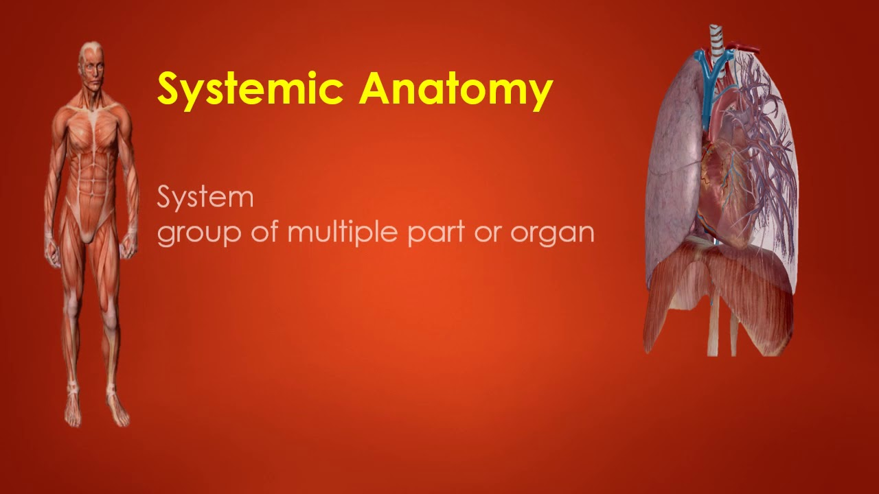 Lesson No 01 What Is Anatomy & Physiology Human Body - YouTube