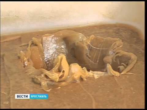 Воспитанники школы-интерната Некрасовского района получили подарок - 70 кг меда