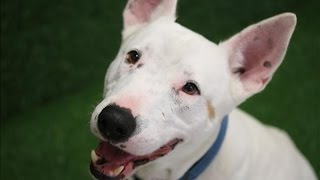Boosta - Adopt In Brisbane
