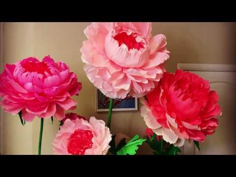 видео: Ростовые цветы. Ответ на вопросы.