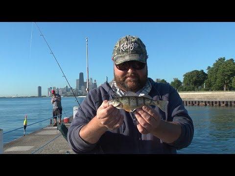 Lake Michigan Perch