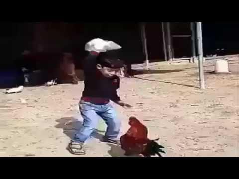 Anak Kecil VS Ayam Jago  [ Funny Moment ]