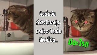 เมื่อเจ้าเหมี๋ยวกำลังกินน้ำ-แล้วโดนกวนจะเกิดอะไรขึ้น-รวมคลิปฮาพากย์ไทย