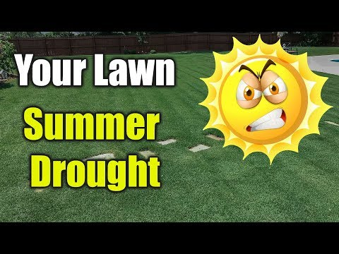 Summer Lawn Care – Hot Dry Drought Conditions