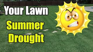 Summer Lawn Care - Hot Dry Drought Conditions