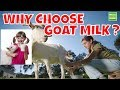 Health Benefits of GOAT'S MILK Here Are 5 Reasons To Drink It