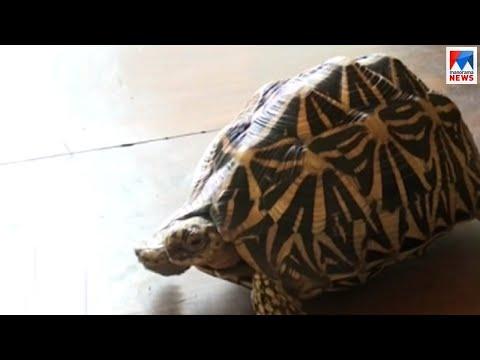 കട്ടപ്പനയിൽ നക്ഷത്ര ആമയുമായി അഞ്ചുപേർ പിടിയിൽ | Idukki Kattappana | Star Tortoise